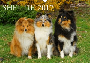 Sheltie 2017