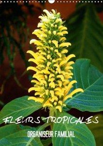 Fleurs tropicales / organiseur familial (Calendrier mural 2015 D
