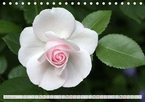 Blüteneleganz in Weiß (Tischkalender 2019 DIN A5 quer)
