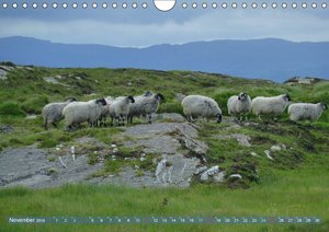 Schafe - soweit das Auge reicht