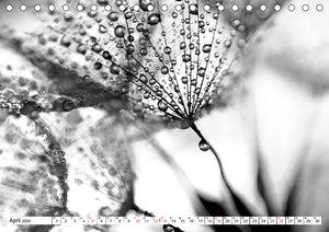 Pusteblumenzauber in schwarzweiß
