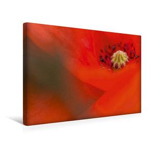 Premium Textil-Leinwand 45 cm x 30 cm quer Roter Mohn