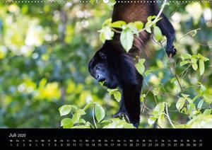 Costa Rica - Tiere des Regenwaldes