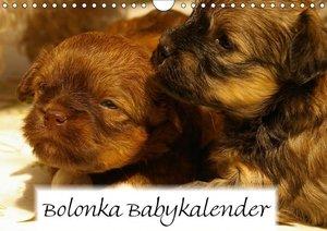 Bolonka Babykalender 2018