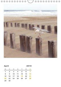 Hollands Strandparadies Zeeland (Wandkalender 2019 DIN A4 hoch)