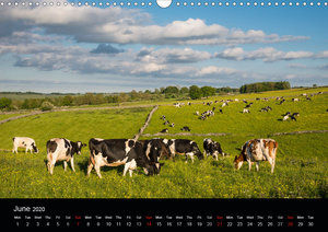 Animals in the countryside (Wall Calendar 2020 DIN A3 Landscape)