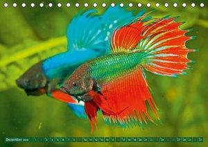 Glanz im Aquarium: Süßwasserfische