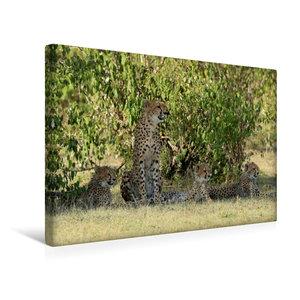 Premium Textil-Leinwand 45 cm x 30 cm quer Geparden unter schatt