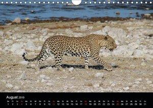 Namibia - Tierische Vielfalt (Wandkalender 2019 DIN A4 quer)