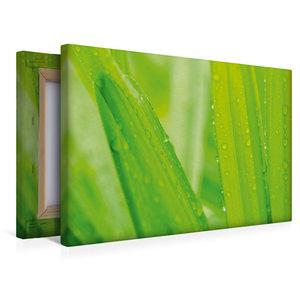 Premium Textil-Leinwand 45 cm x 30 cm quer Palmen im Regen
