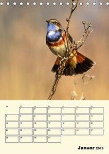 Blaukehlchen. Gefiederte Juwelen der Natur. (Tischkalender 2019