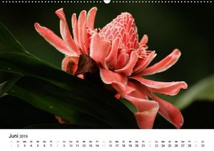 Costa Rica - Die Farben der Natur (Wandkalender 2019 DIN A2 quer