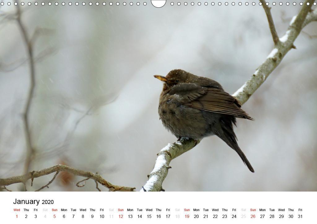 Wildlife of Europe 2020 - zum Schließen ins Bild klicken