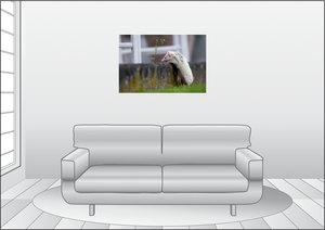 Premium Textil-Leinwand 90 cm x 60 cm quer Afrikanischer Weißbau