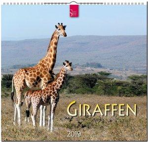 Giraffen 2019