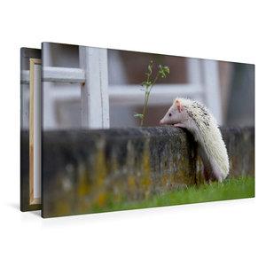 Premium Textil-Leinwand 120 cm x 80 cm quer Afrikanischer Weißba