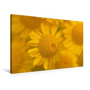 Premium Textil-Leinwand 90 cm x 60 cm quer Gelbe Mageriten