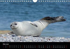 Das Leben der Robben