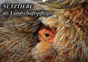 Nutztiere als Landschaftspfleger (Wandkalender 2019 DIN A3 quer)
