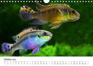 Beliebte Fische der Welt