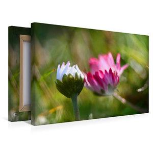 Premium Textil-Leinwand 45 cm x 30 cm quer Zwei Gänseblümchen