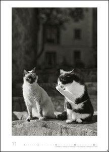 Wegler Cats Edition Kalender 2020