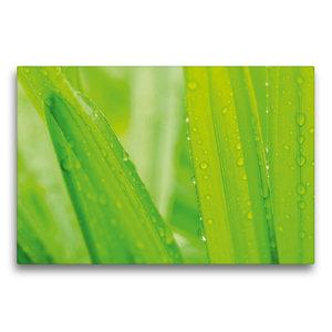 Premium Textil-Leinwand 75 cm x 50 cm quer Palmen im Regen