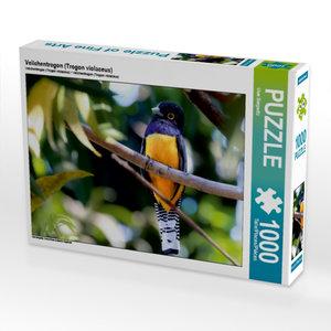 Veilchentrogon (Trogon violaceus) 1000 Teile Puzzle quer