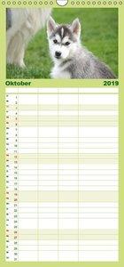 Siberian Husky - der Urtyp - Familienplaner hoch