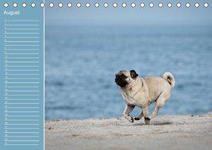 Mopsiger Geburtstagskalender (Tischkalender immerwährend DIN A5