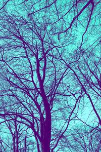 Premium Textil-Leinwand 80 cm x 120 cm hoch Winterbaum