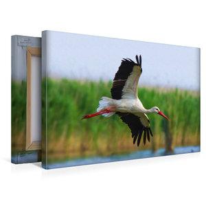 Premium Textil-Leinwand 45 cm x 30 cm quer Weißstorch