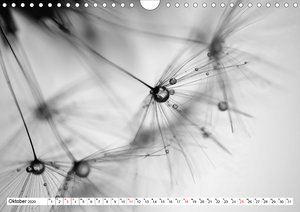 Pusteblumenzauber in schwarzweiß (Wandkalender 2020 DIN A4 quer)