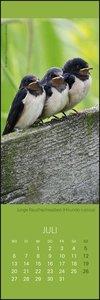 Vögel in unseren Gärten Lesezeichen & Kal Kalender 2020