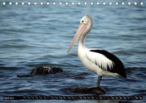 Die Tierwelt in Australien (Tischkalender 2019 DIN A5 quer)