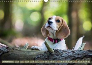 Beaglebabys auf Entdeckungstour