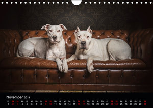 DOGO ARGENTINO (Wandkalender 2019 DIN A4 quer)