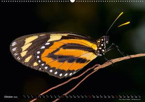 Schmetterlinge - Bunte Flieger 2020CH-Version