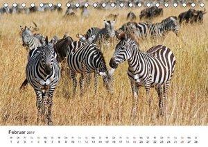 Zebras - Gestreifte Welt