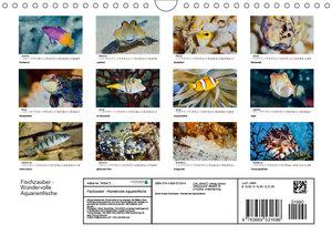 Fischzauber - Wundervolle Aquarienfische (Wandkalender 2019 DIN