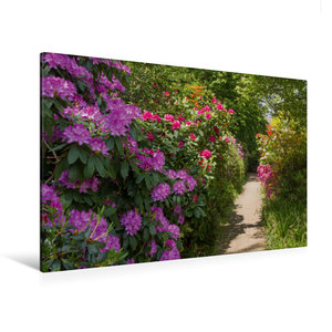 Premium Textil-Leinwand 120 cm x 80 cm quer Blühende Rhododendre