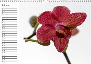 Blütenzauber Orchideen (Wandkalender 2019 DIN A3 quer)