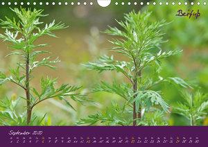 Heilkräuterkalender (AT-Version)