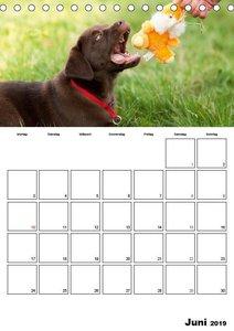 Labrador Welpe - Seelenhund (Tischkalender 2019 DIN A5 hoch)