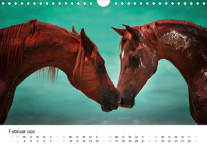 Pferde - Magdalena Strakova (Wandkalender 2020 DIN A4 quer)