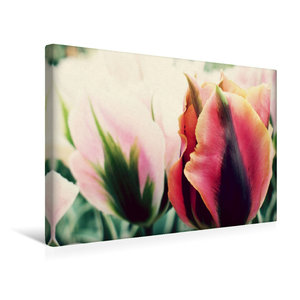 Premium Textil-Leinwand 45 cm x 30 cm quer Tulpen