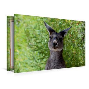 Premium Textil-Leinwand 120 cm x 80 cm quer Wallaby, Western Aus