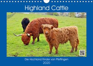 Highland Cattle, die Hochlandrinder aus Pfeffingen (Wandkalender