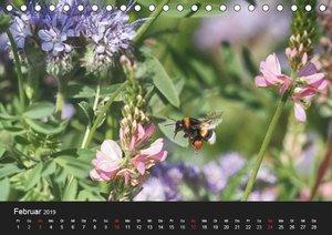 Hummelflug (Tischkalender 2019 DIN A5 quer)
