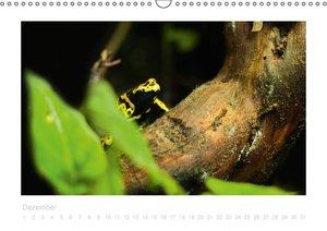 Frösche und Kröten (Wandkalender immerwährend DIN A3 quer)